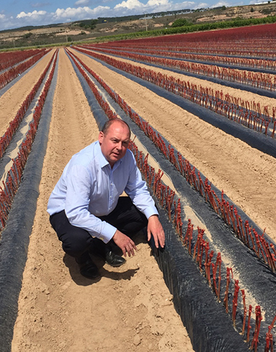 Rupert Hargreaves inspecting grape rootstocks
